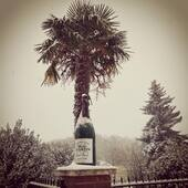 Neige ❄️ #happy #lucky #thanks#champagne #cumieres #epernay #reims #france #winter