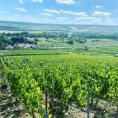 5 ème jour de vendanges ... 🍇🍇🍇#harvest #harvesttime #champagne #cumieres