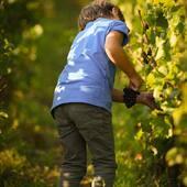 La relève 🍇🤞🏻🍾💙# harvest #champagne #family #familybusiness