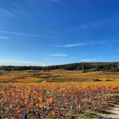 Couleurs d'automne 🍂🍃🍁🍂#champagne #hautvillers #automne🍂